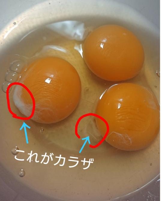 卵のカラザ